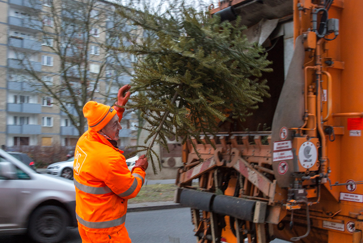 Weihnachtsbaum Service.Für Verspätete Weihnachtsbäume Bsr Startet Wieder Entdecker Service